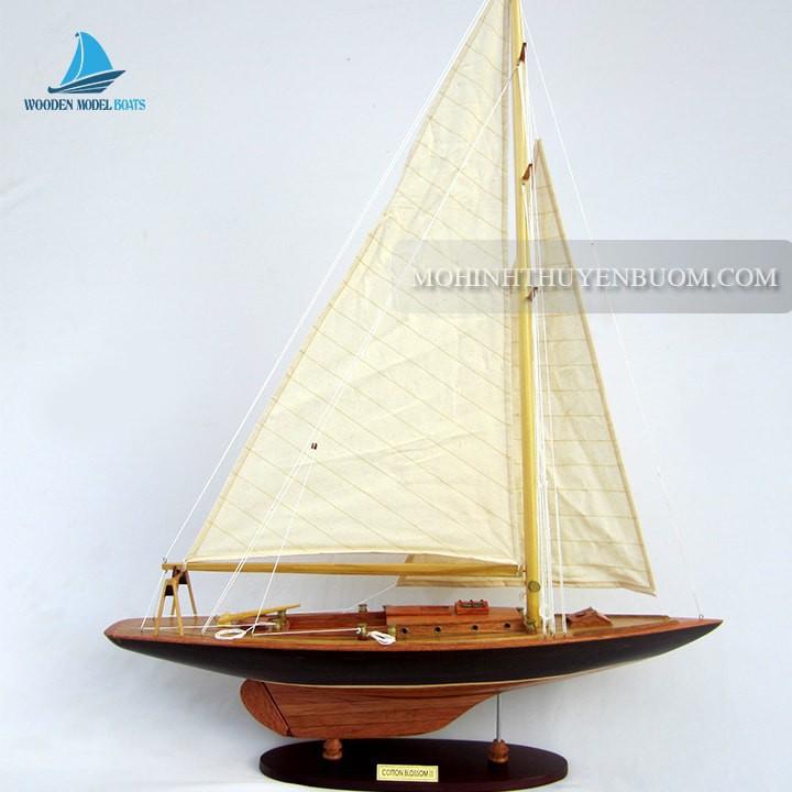 Thuyền buồm COTTON BLOSSOM II